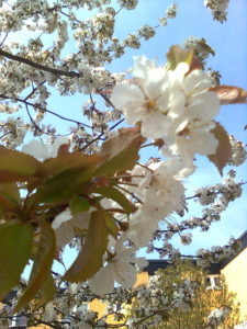 en blommande föening